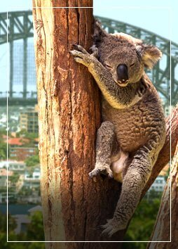 Australia flights from £ 499