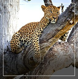 Zambia flights from £ 428