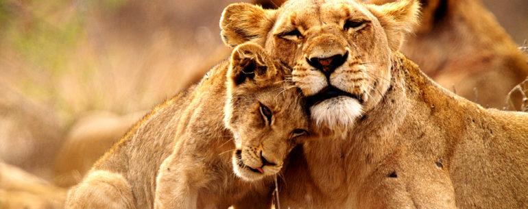 Best South African Safaris for the Wilderness Lovers