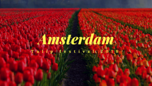 Amsterdam Tulip Festival 2018 ; Best time to Visit Amsterdam