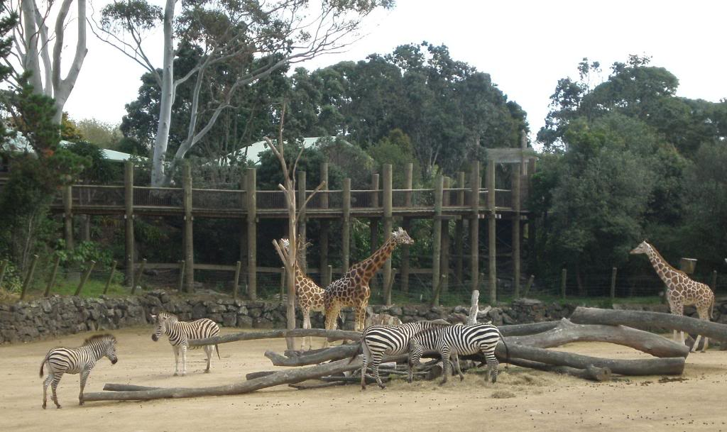 zoo and united kingdom zoos