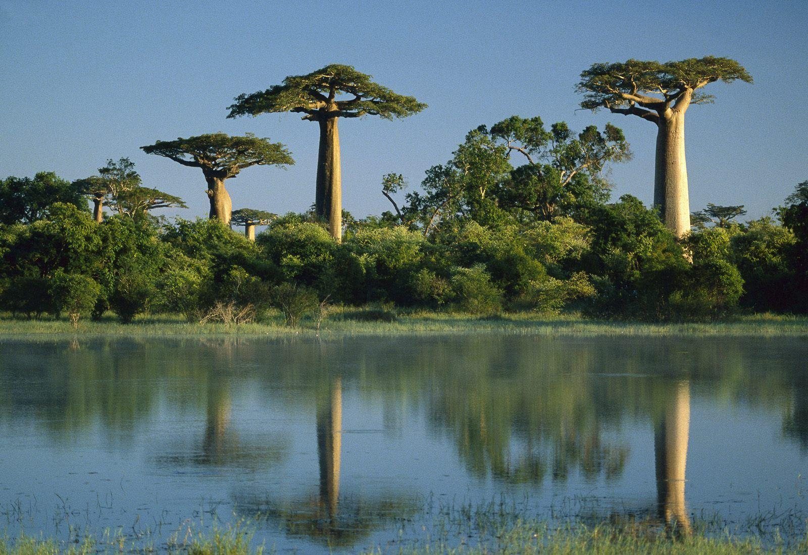 A Unique Vacation In Gorgeous Madagascar