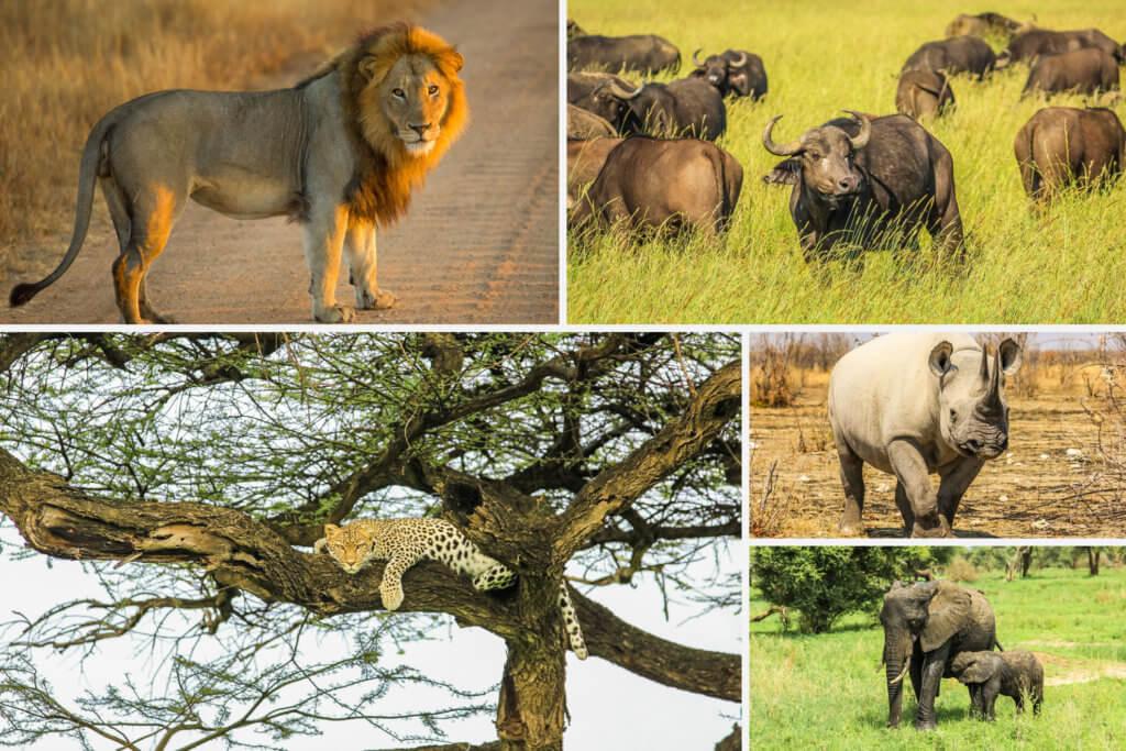 Big Five in Kenya
