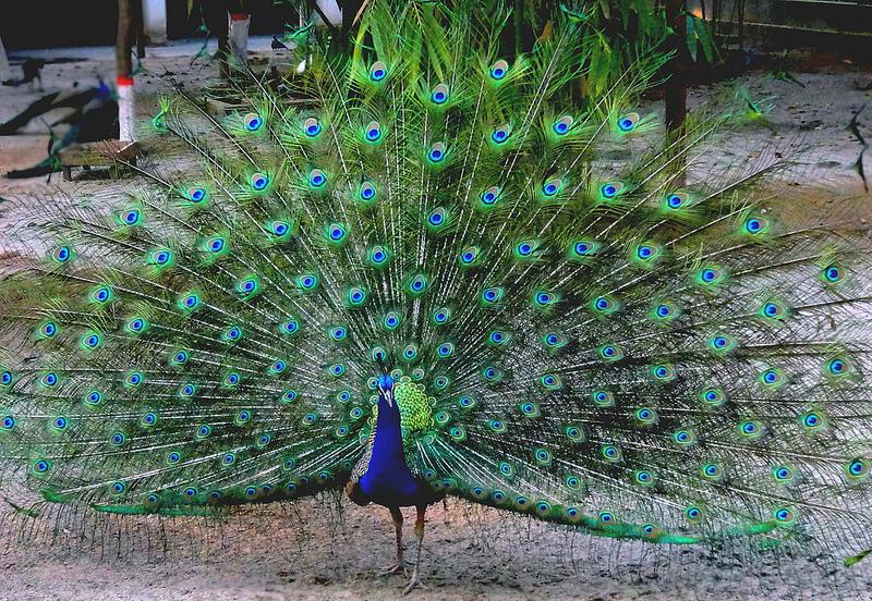 Mirpur Zoo, Dhaka, Bangladesh