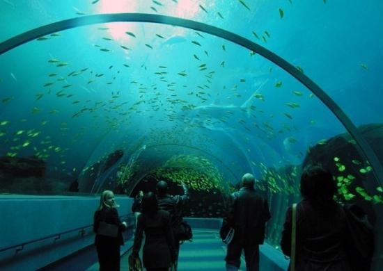 Asian aquarium whale sharks