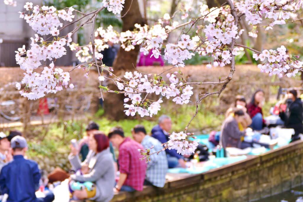 The Hanami Festival