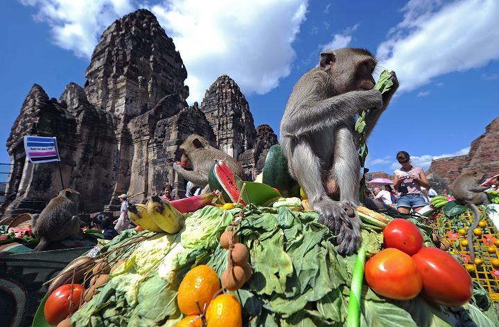 Monkey Buffet Festival Bangkok Thailand 2013