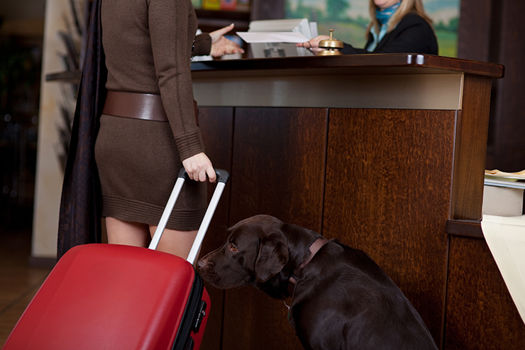 Female with dog and baggage at hotel reception