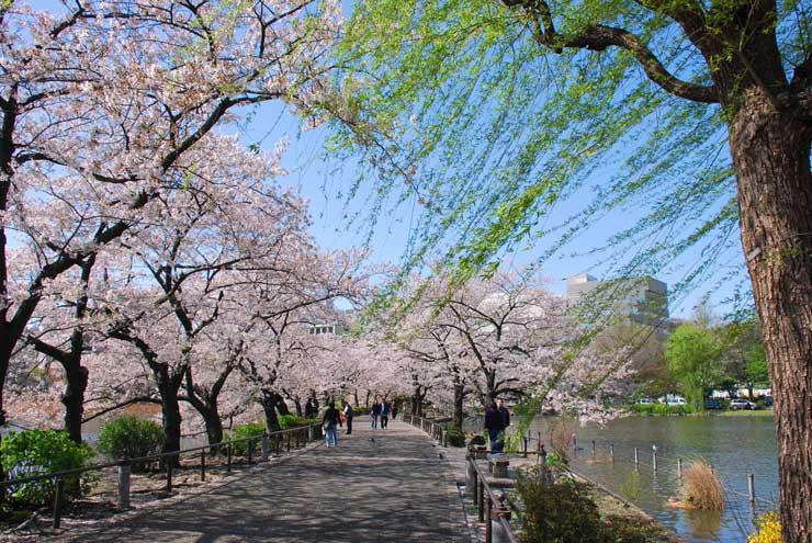 Sakura Park Tokyo Japan