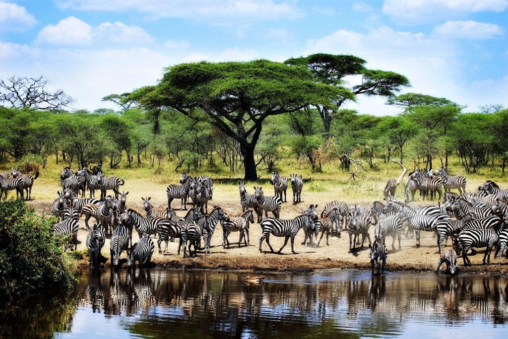National Park in Tanzania