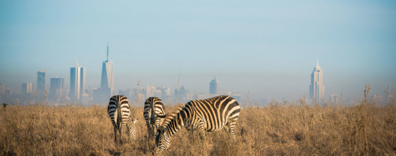 National Park in Nairobi
