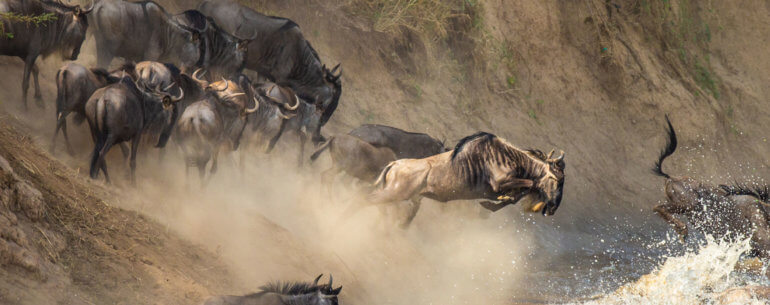 Annual Migration of Wildlife in Kenya