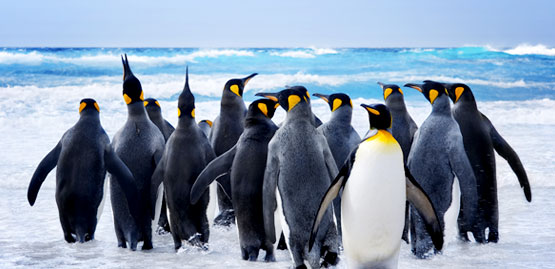 Cheap Flight to Falkland Islands